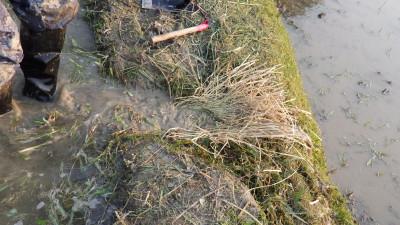 藁を入れて泥の流出と水の流れを抑える「ミグサワラ」