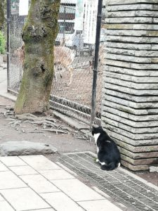 猫ちゃんと鹿